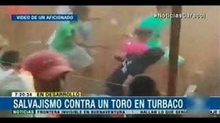 Salvajismo contra un Toro en Turbaco, Bolivar lo matan a punta de Patadas, Puños, Puñaladas