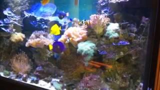 видео Морской аквариум на заказ