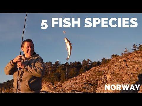 Fiskeplassen - torsk, hvitting, flyndre, taggmakrell og knurr