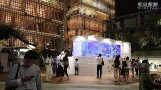 ナポレオンフィッシュ、銀座で泳ぐ ビル跡地に大型水槽