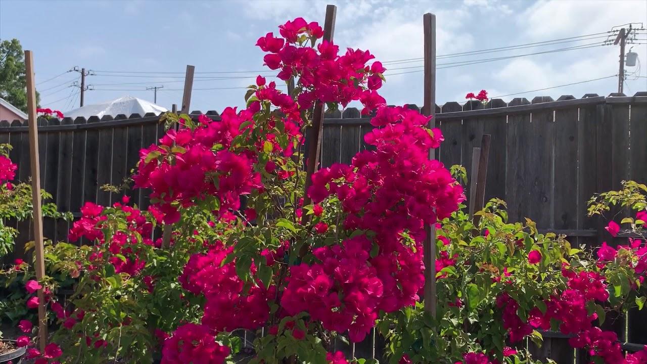 Martinez Nursery Flowers 2020 You