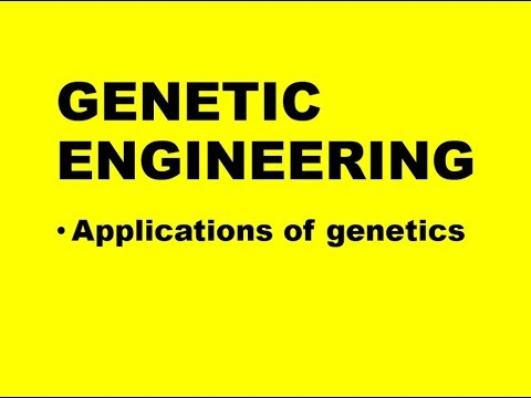 APPLICATION OF GENETICS: GENETIC ENGINEERING (Exam 2)