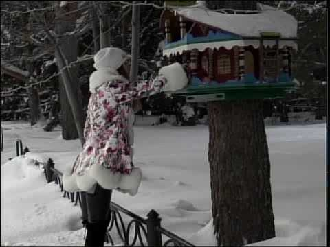 Птичий пикник. Синички и воробушки кушают зимой с кормушки.