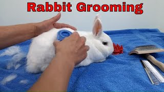 How to Groom a Short Haired Rabbit