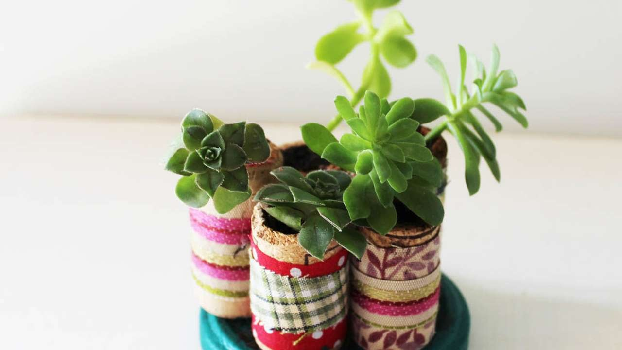 How To Create A Miniature Succulent Garden