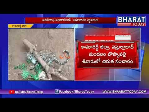Bharat Today Exclusive: Cheetah Halchal In...