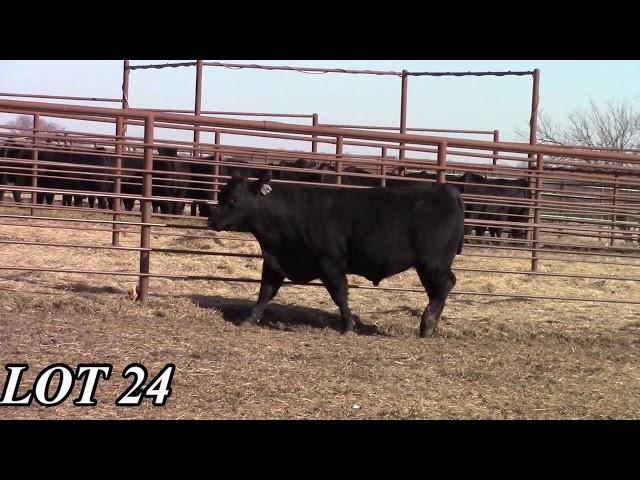 Mead Angus Farms Lot 24