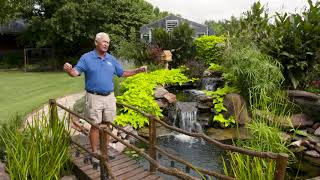 Growing 'Pea Soup' Algae in your Pond??