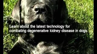 Scientific Dog Kidney Disease Diet   Holistic   Organic   Natural Dog Food Dog Kidney Disease Diet