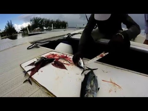 Deep Sea Fishing Grand Cayman with ReelEsea Charters (rough edit)