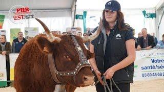 Simon et Jude : Montbéliarde, Holstein et Salers !