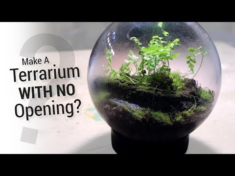How to Make a Terrarium Without An Opening