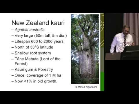 DIG 2013. Dr Stan Bellgard. New Zealand Kauri Agathis under threat from Phytophthora