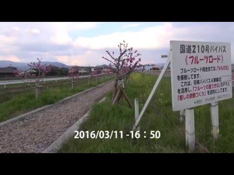 うきはかいねっと 道の駅よりフルーツロードの今を紹介 2016/03