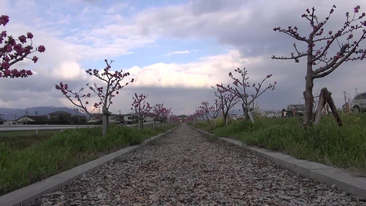 うきはかいねっと 道の駅よりフルーツロードの今を紹介 2016/03/11