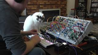 Modular Synth Jam Hesitare Featuring Puss The Cat 26 09 18