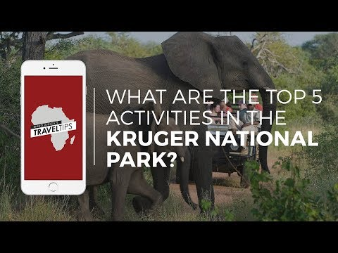 What are the top 5 activities in the Kruger National Park? Rhino Africa's Travel Tips