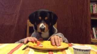 dog eats with hands/ Freddy eats with hands/собака ест руками
