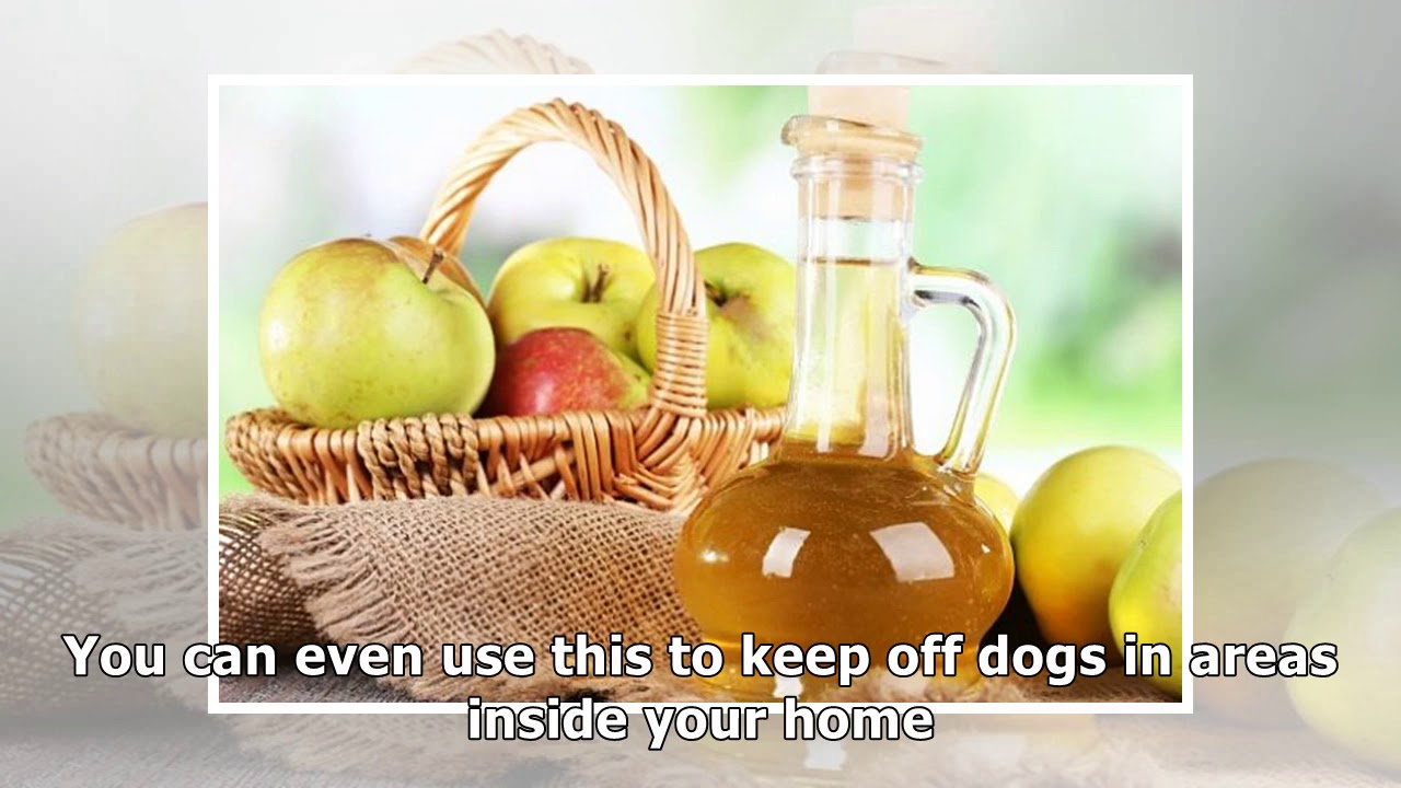 The Best Homemade Dog Repellent For Your Yard In 7 Ways