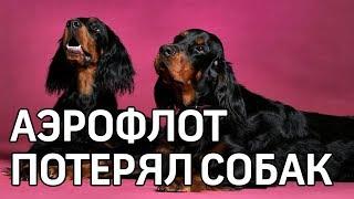 Аэрофлот потерял собак стоимостью полмиллиона