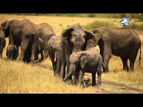 Elegance Travel-Kenya