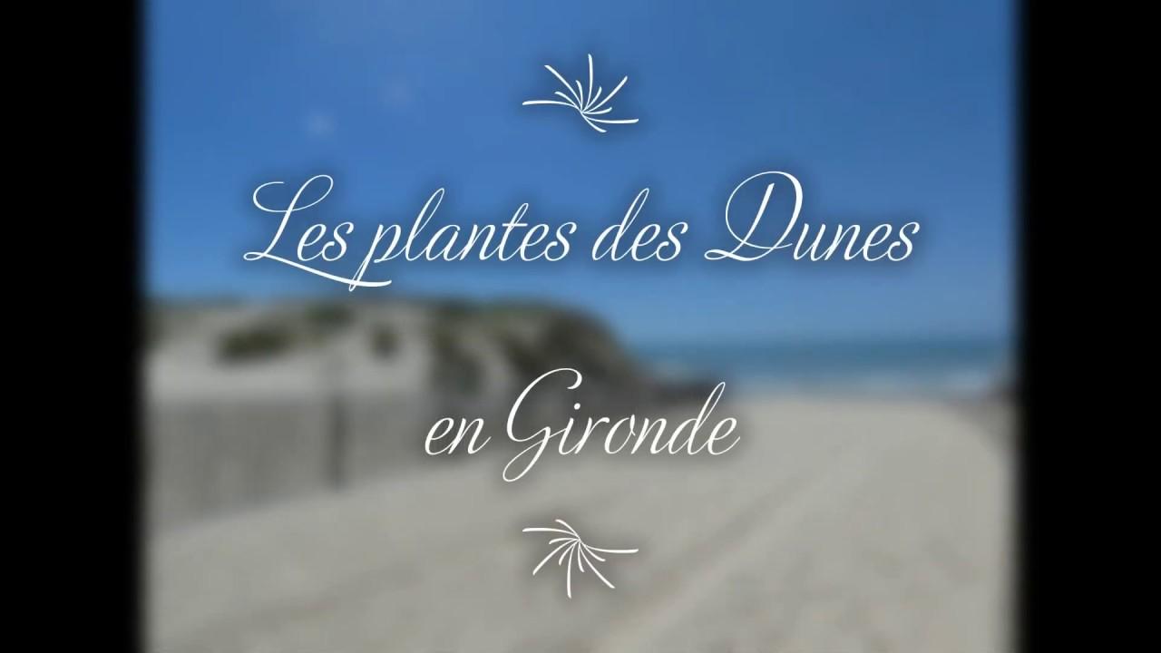Les plantes du littoral