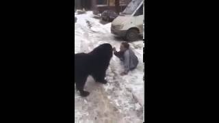 Собака получила медаль за отвагу