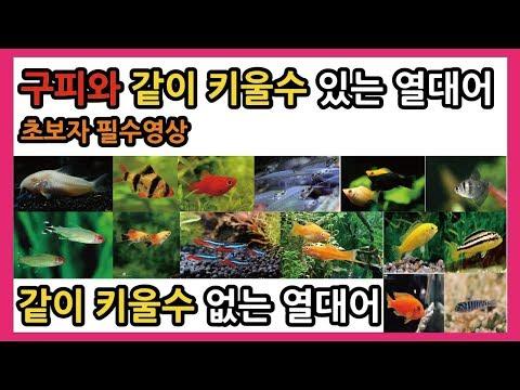 구피와 같이 키울수 있는 열대어종류 -열대어