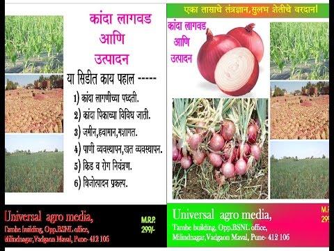 Kanda - onian - कांदा उत्पादन  helpline - 9730607617
