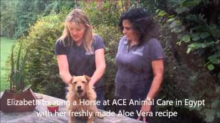 The beneficial uses of Aloe Vera for skin conditions in animals