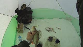 Ловля окуня на блесну. Такой рыбалки я даже не ожидал. Часть 2