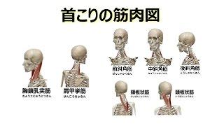 図解 = 首こりの5つの筋肉