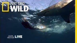 High-Tech Underwater Cameras | Shark Attack Experiment Live!