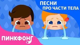 Почему? Слёзы и кожа | Песни про Части Тела | Наука для Детей | Пинкфонг Песни для Детей