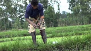 Repeat youtube video ตกปลาไหล ในครบุรี