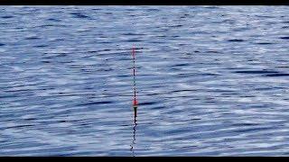 Рыбалка на поплавок в феврале 2020. Ловим Плотву