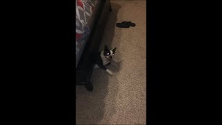 Determined Dog Under the Bed Giving Its Best to Get Out