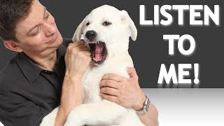 The EASIEST Way to Get Your Dog to Understand You! (How to teach your dog words and phrases now!)