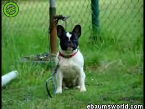 Пёс который не умеет лаять!