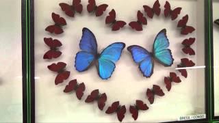 Expositions - Merveilles du Monde - Papillons et insectes tropicaux - Édition 2015 à Avallon (89)