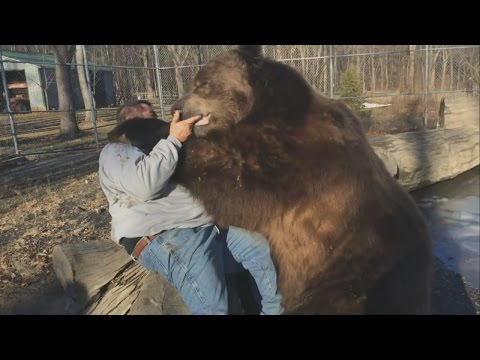 Bear hug: Man befriends giant brown bear in US rescue centre