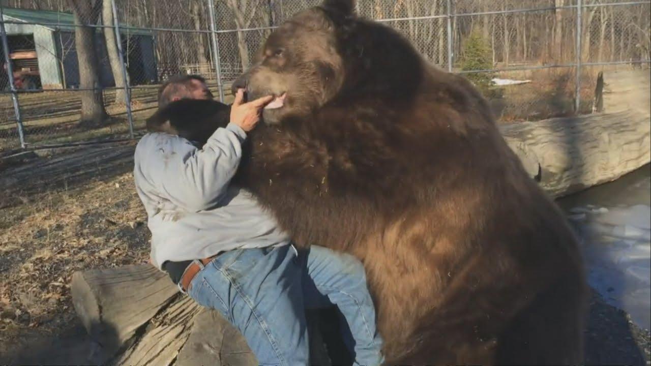 47b8d600 Bear hug: Man befriends giant brown bear in US rescue centre