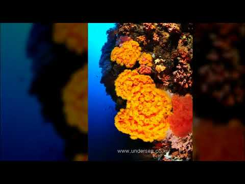 Dive Moal Boal 1. Philippines April, 2018