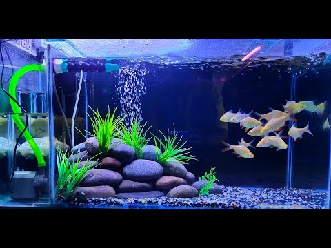 New Freshwater  Aquarium setup 2019