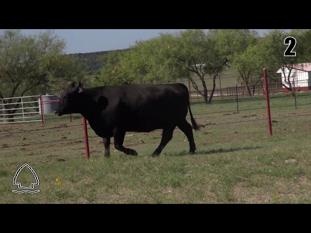 Pearcy Angus Ranch Lot 2