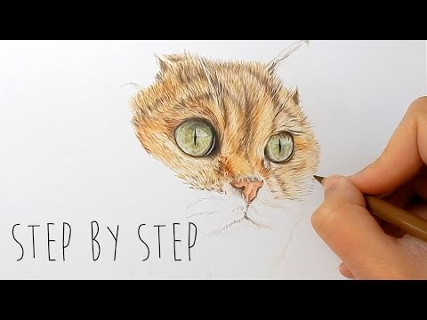 how to draw real life animals