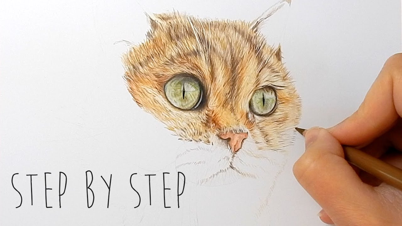 Step By Step  How To Draw, Color Realistic Cat Fur And Nose With Colored  Pencils  Emmy Kalia