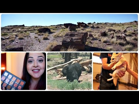 Roadtrip Vlogs: Laura Lee Palette Review, Bearizona, and Petrified Forest National Park!