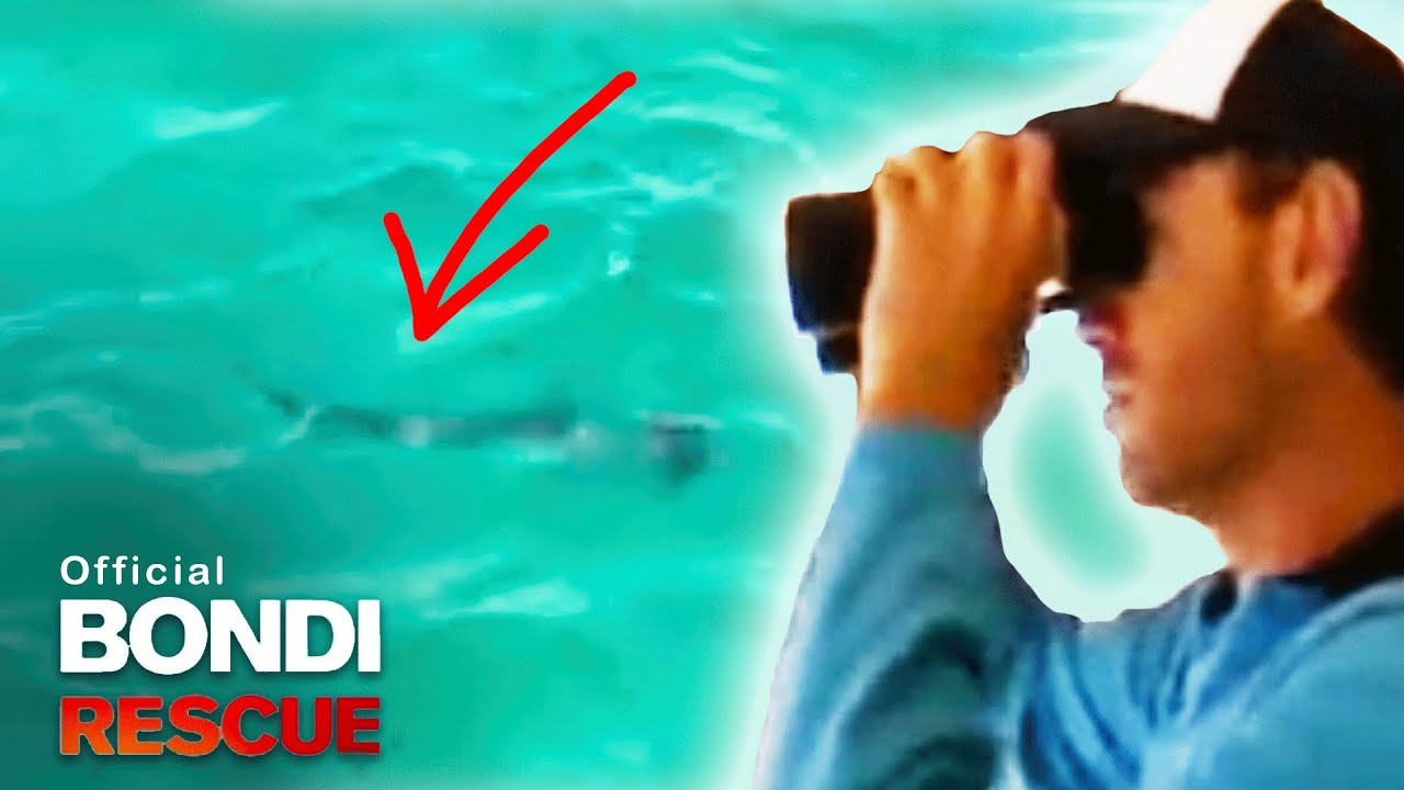 Download Shark Alarm! Bondi Rescue Lifeguards Switch on Alarm (Shark Sighted!)