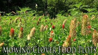 How to Mow Clover Food Plots | Controlling Weeds in Food Plots